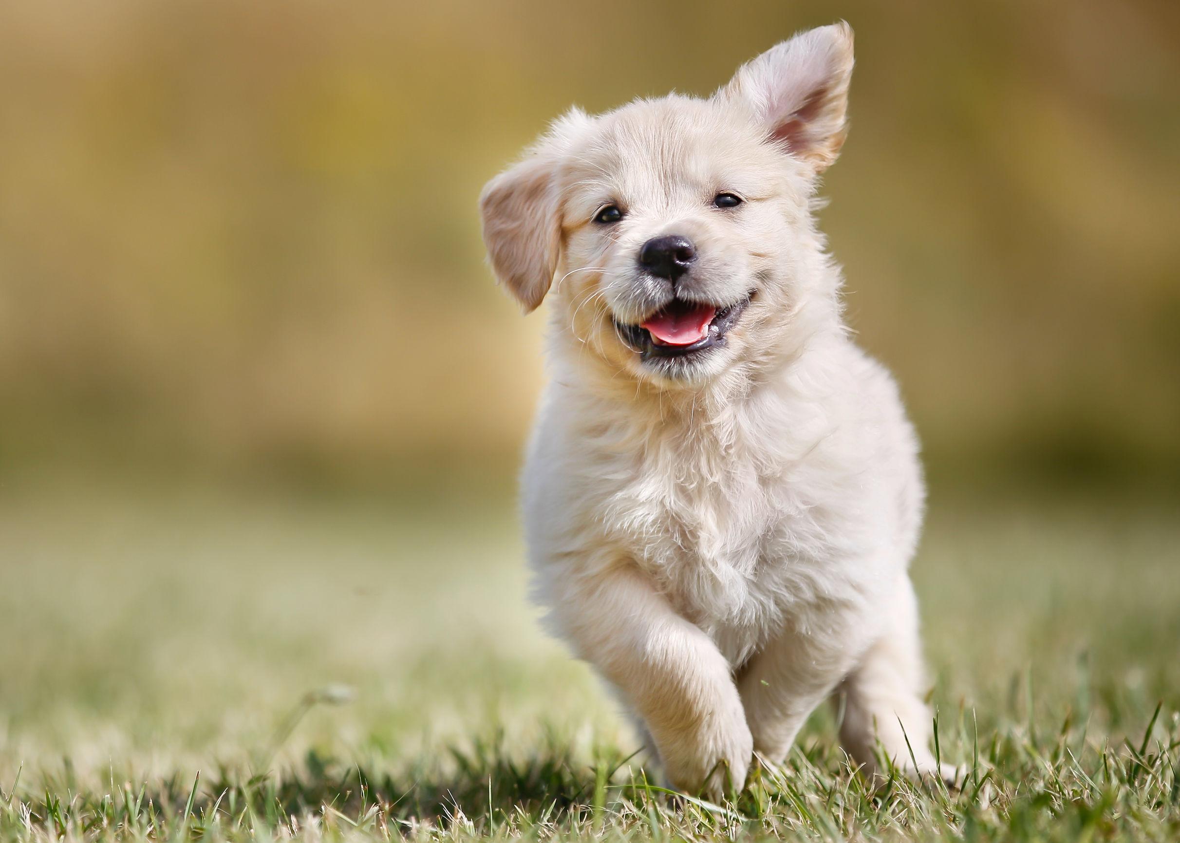 Desparasitantes para perros: ¿Cuál es la mejor del 2021?