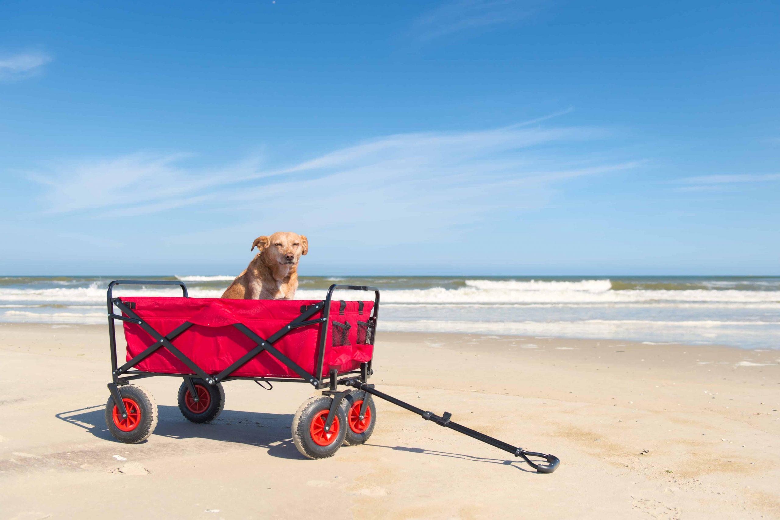 Carriola para perros: ¿Cuál es la mejor del 2020?
