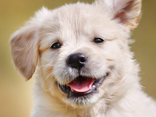 Desparasitantes para perros: ¿Cuál es la mejor del 2020?