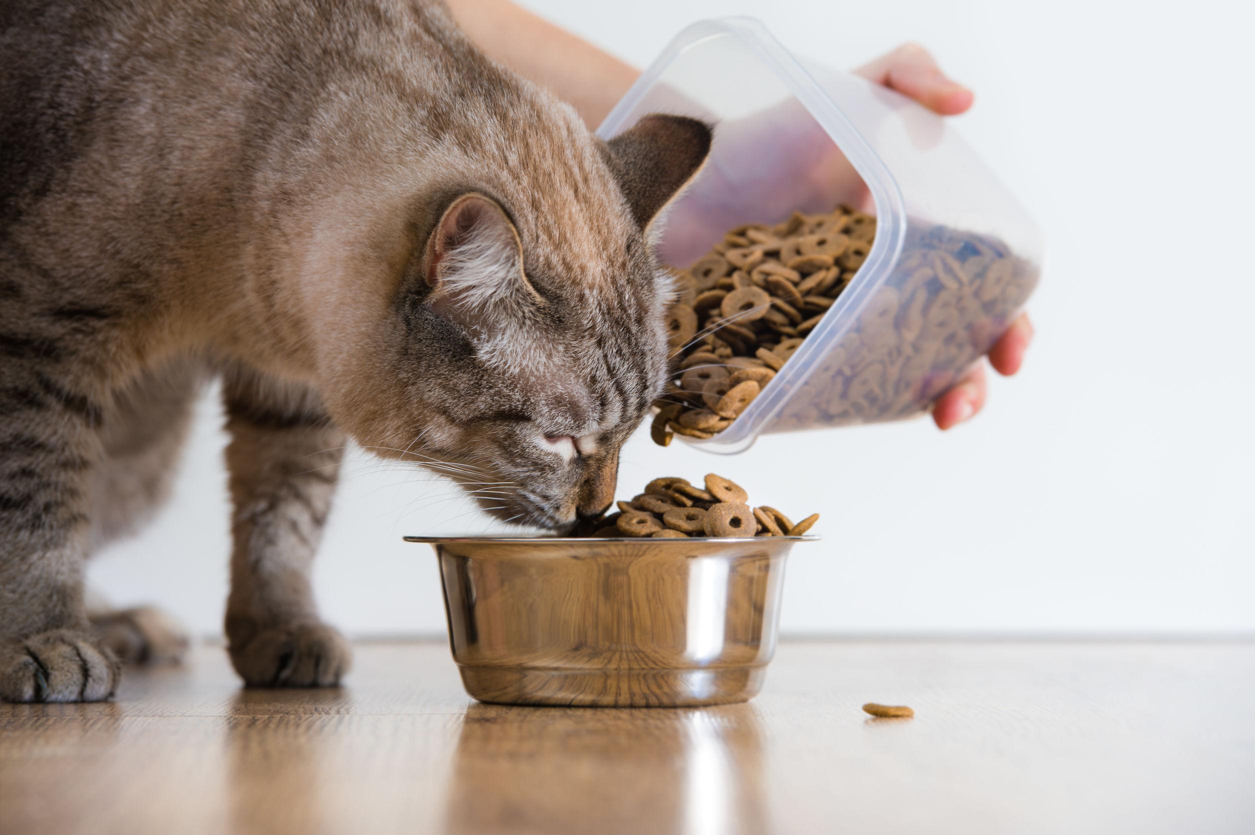 Comida para gato: ¿Cuál es la mejor del 2021?
