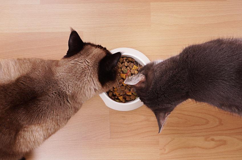 Dos gatos comiendo del mismo plato