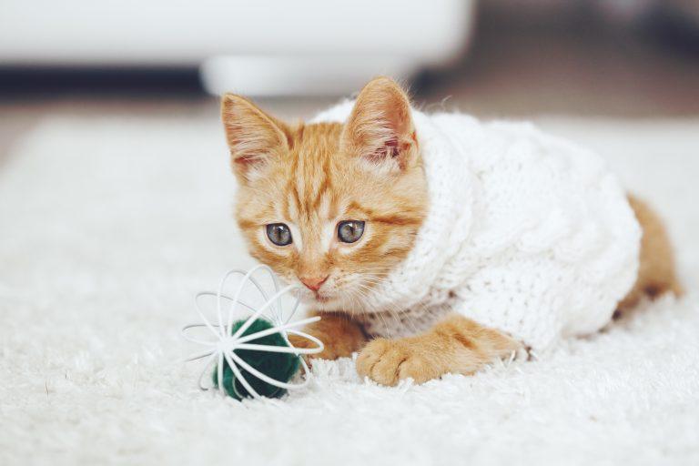 juguete para gato-2