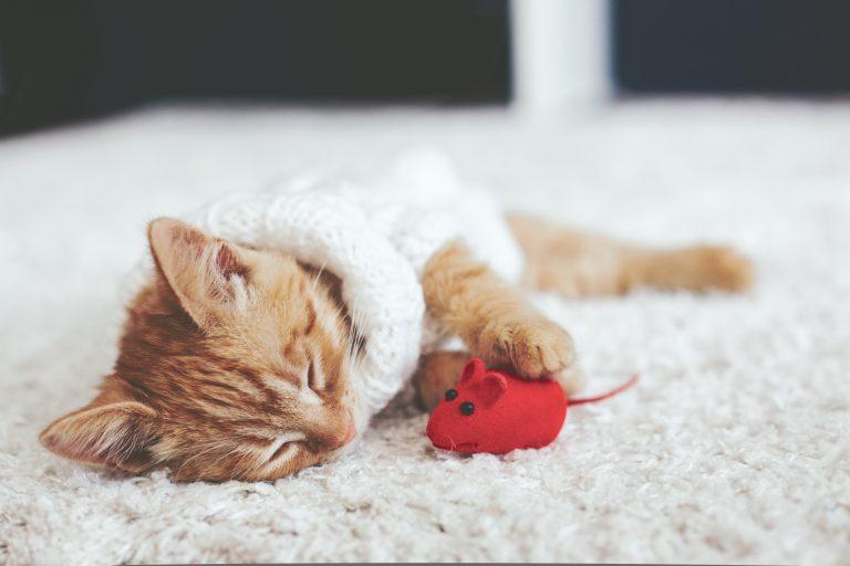 juguete para gatos-4