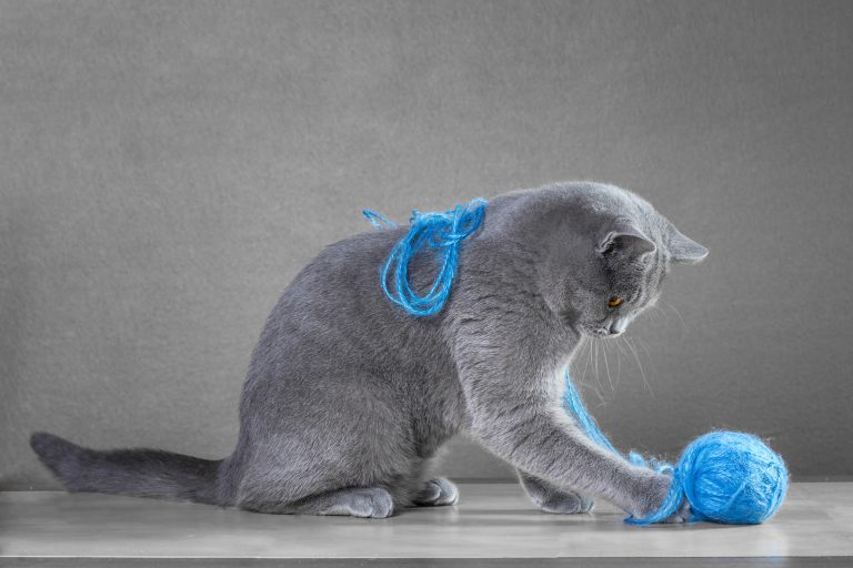 juguete para gatos-3