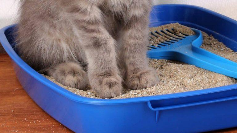 Arena para gatos: ¿Cuál es la mejor del 2021?