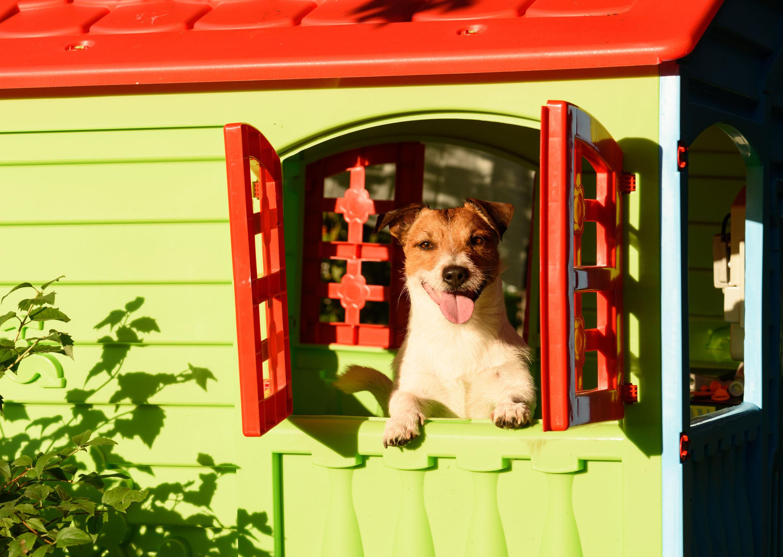Perro en caseta