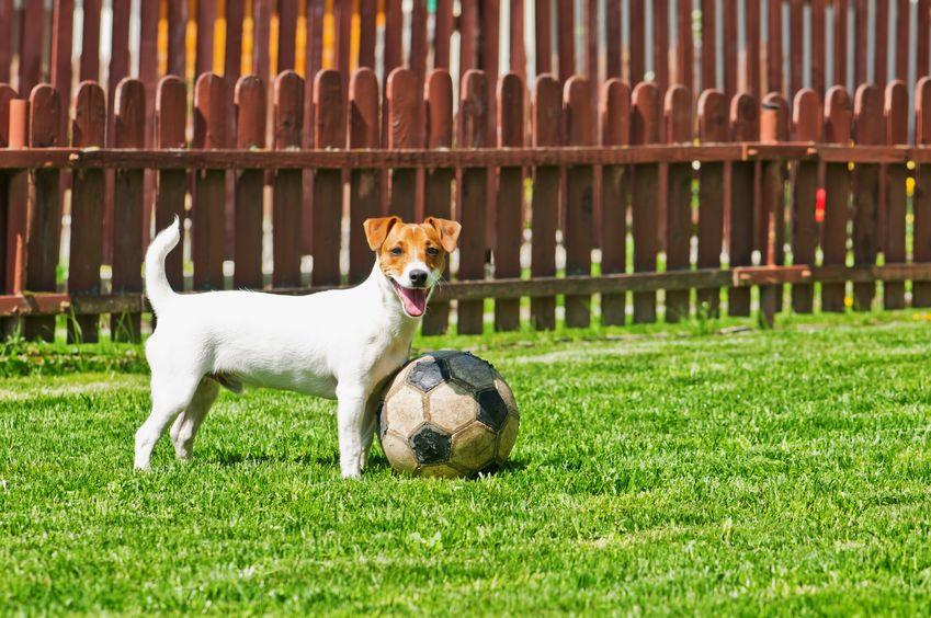 Perro jugando con pelota de fútbol