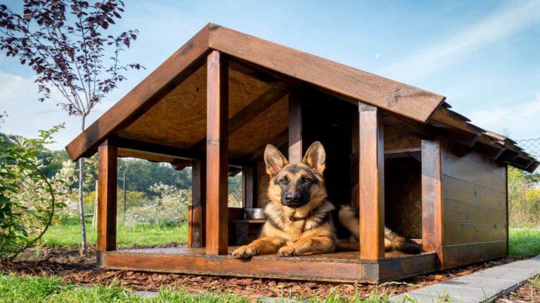 Casa para perros: ¿Cuál es la mejor del 2019?