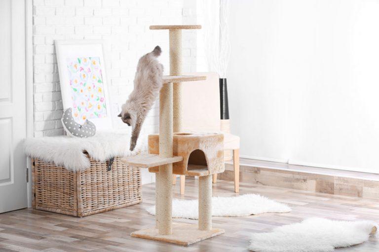 gatito bajándose de su juguete