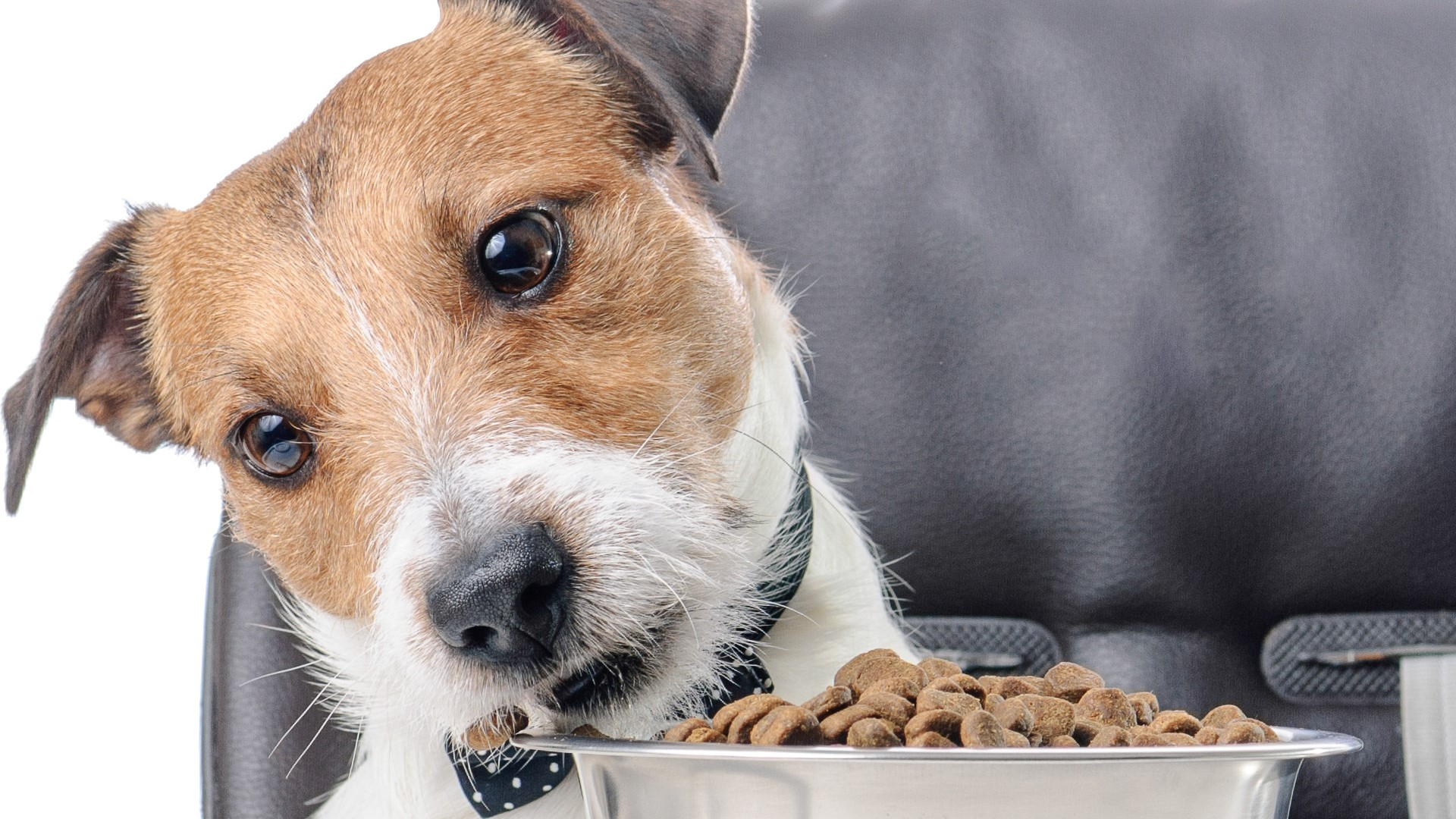 Alimentos naturales para perros: ¿Cuál es el mejor del 2020?