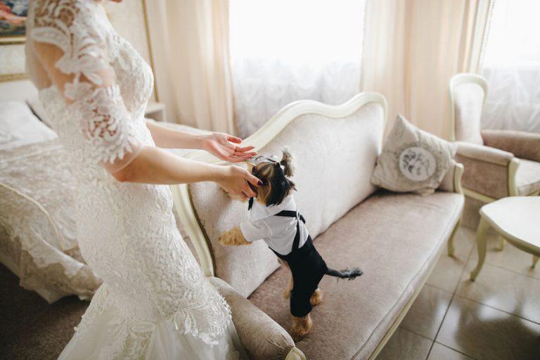 Perro en traje de gala