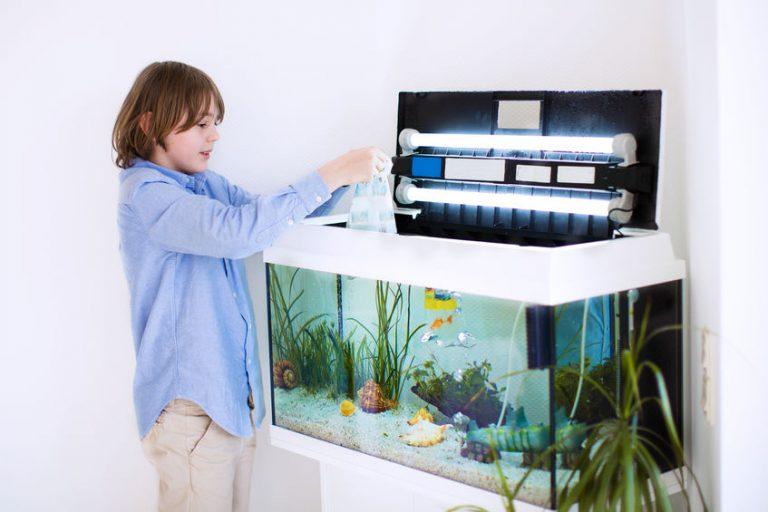 Niño colocando pez en el acuario
