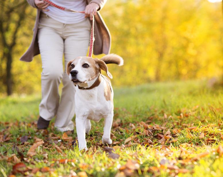 Una persona paseando con su perro en parque