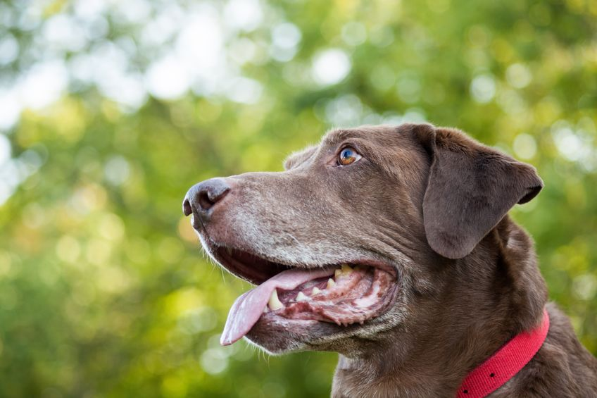 Perro con collar rojo