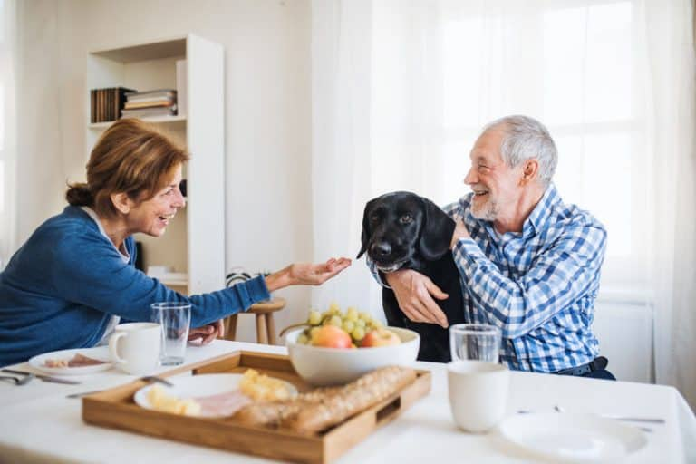 Dos personas mayores cuidado a un perro