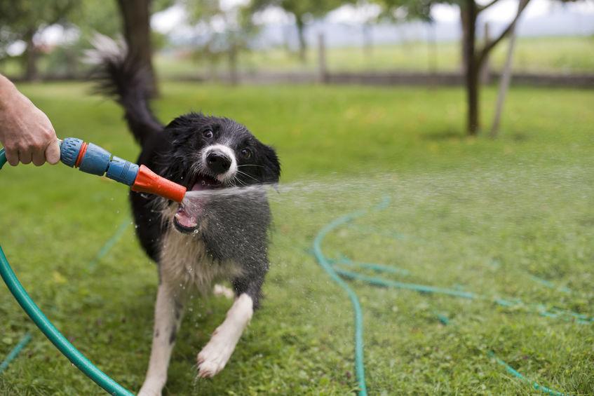 Perro jugando con manguera al aire libre