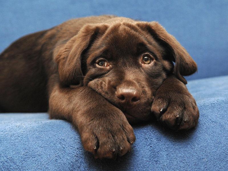 Sofá-para-perros