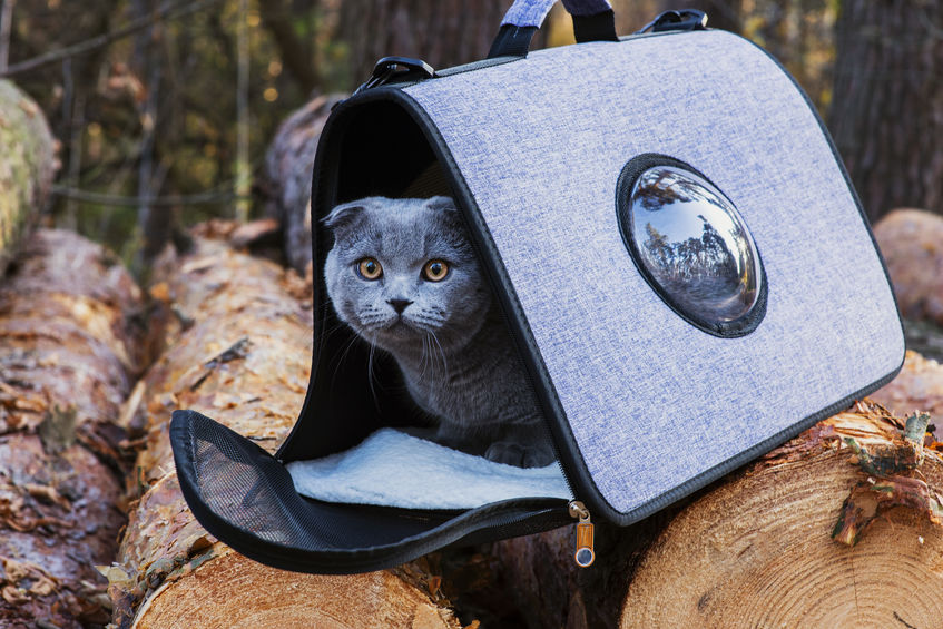 gato en mochila