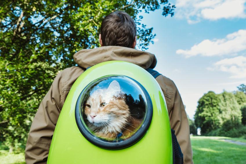 gato dentro de mochila