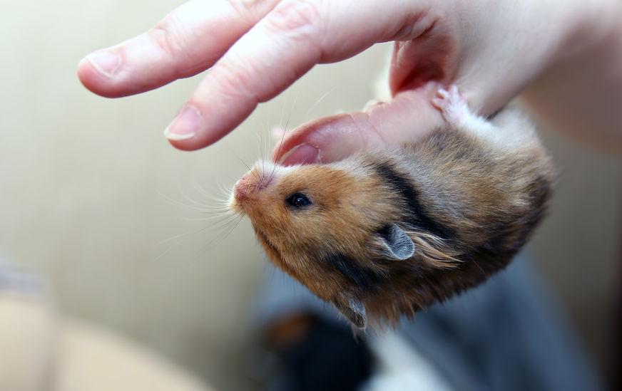 Accesorios-para-hamster