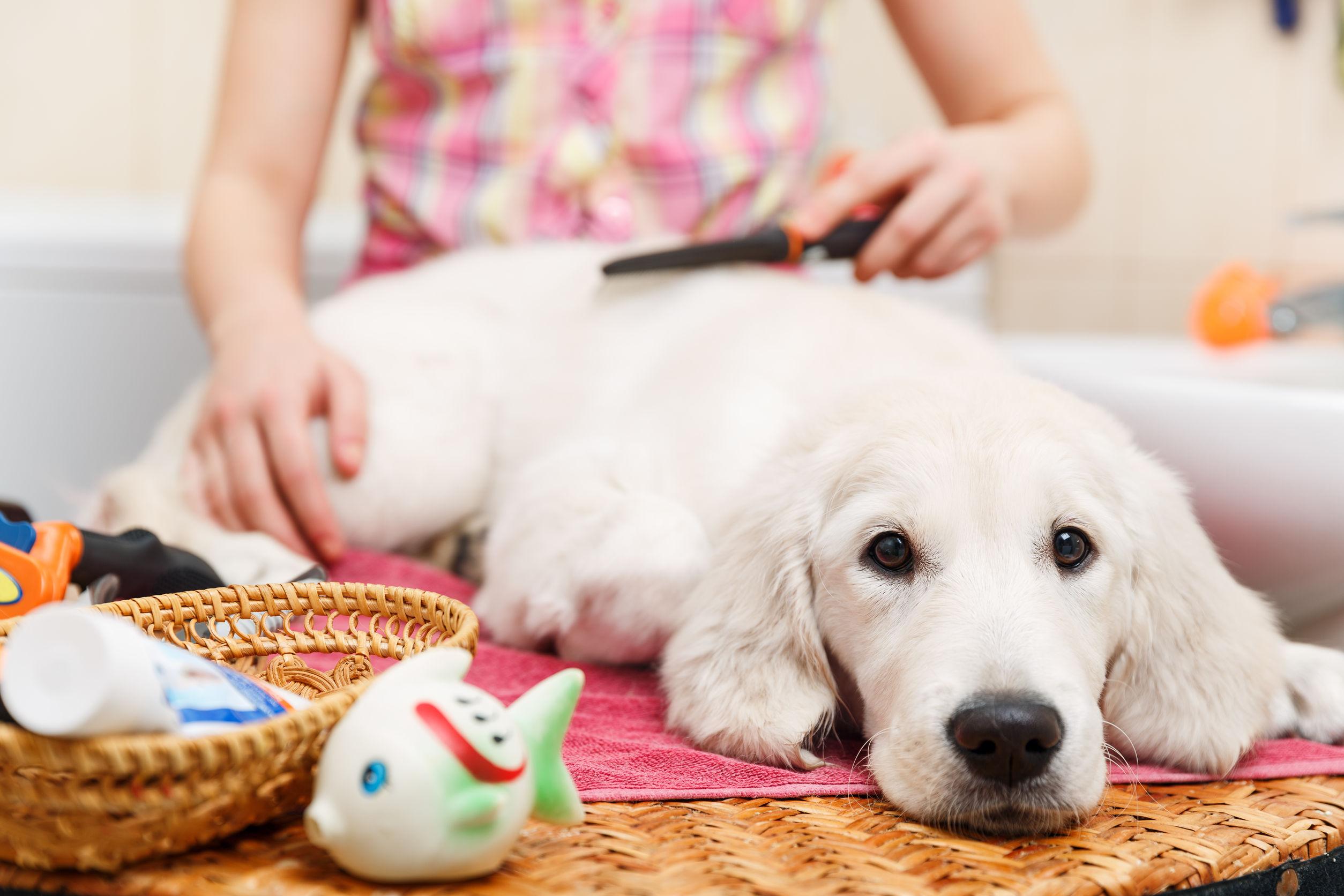Acondicionador-para-perros