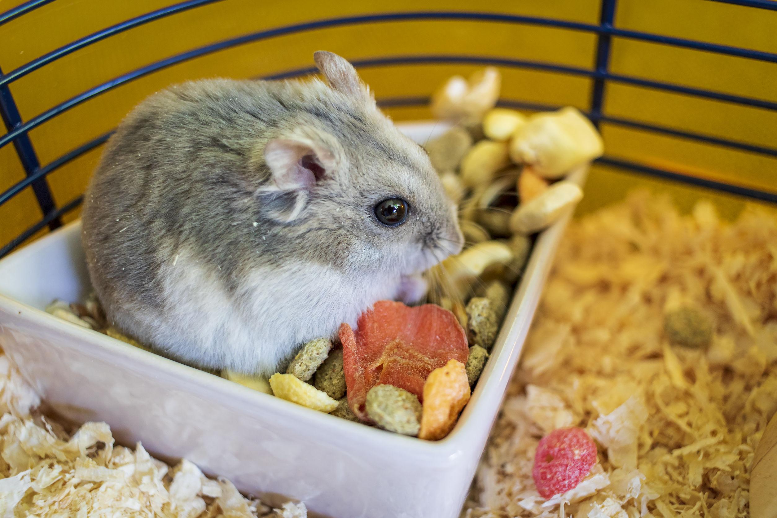 Comida-para-hamster