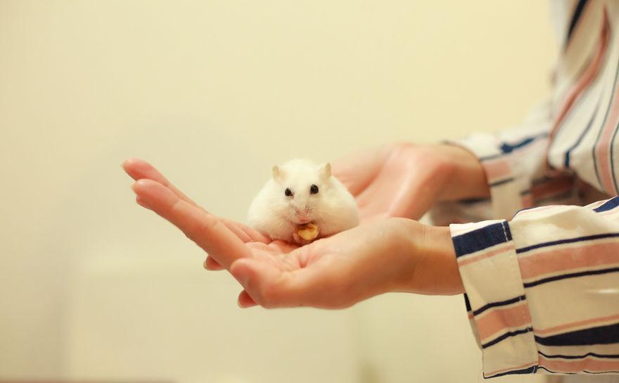 Mujer sosteniendo un hamster en su mano