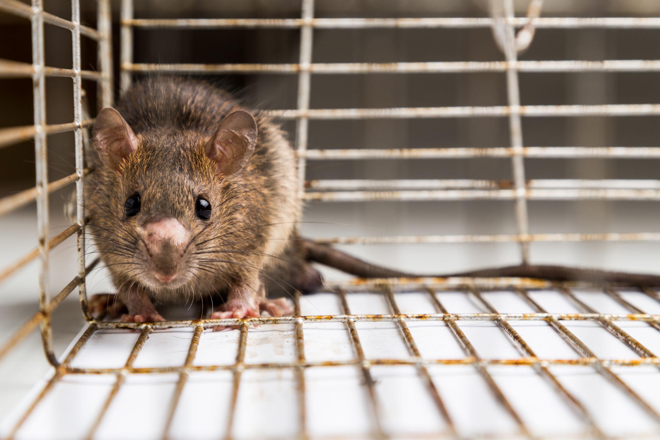 trampas-para-ratonoes