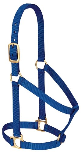 Weaver Leather Basic - Cabestro para Caballo de Nailon no Ajustable, Color Azul, 1 Pulgada Grande